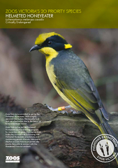 Zoos Victoria is committed to saving the Helmeted Honeyeater. With a h