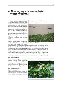 4. Floating aquatic macrophytes  Water hyacinthsMature plants of water