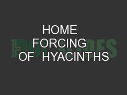 HOME  FORCING  OF  HYACINTHS