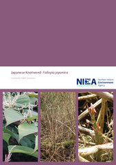 Japanese Knotweed- Fallopia japonicaCommonly Asked Questions: