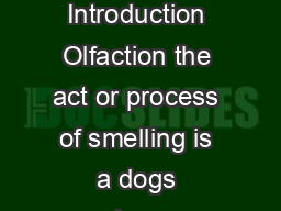 The Dogs Sense of Smell Introduction Olfaction the act or process of smelling is a dogs primary special sense