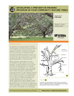 IntroductionA preventive pruning program should be designed to create PDF document - DocSlides