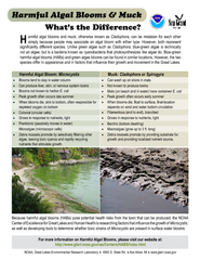 armful algal blooms and muck