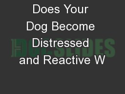 Does Your Dog Become Distressed and Reactive W