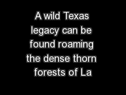 A wild Texas legacy can be found roaming the dense thorn forests of La