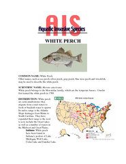 COMMON NAME: White Perch