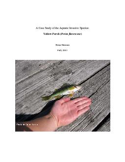A Case Study of the Aquatic Invasive Species:  Yellow Perch (
