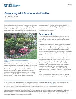Gardening with Perennials in Florida