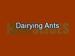 Dairying Ants