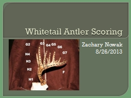 Whitetail Antler Scoring