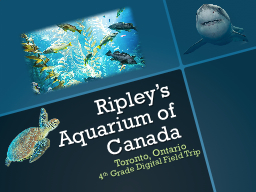 Ripley's Aquarium of Canada PowerPoint PPT Presentation
