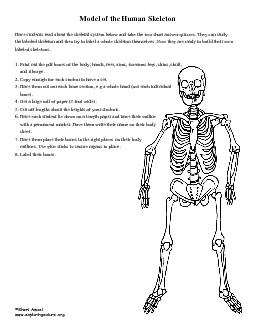 Have students read about the skeletal system below and take the two sh