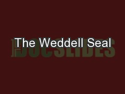 The Weddell Seal PowerPoint PPT Presentation