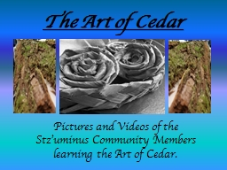 The Art of Cedar