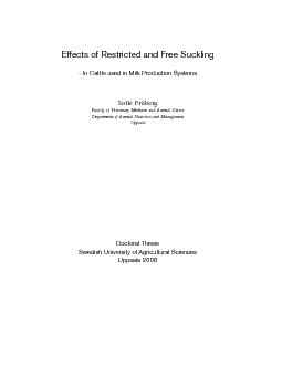 Effects of Restricted and Free Suckling - In Cattle used in Milk Produ