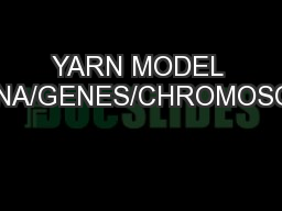 YARN MODEL OF DNA/GENES/CHROMOSOMES