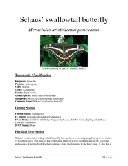 Schaus' Swallowtail Butterfly Page