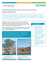 Fire damage to trees can range from minimal to severe. By using proper