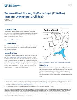 Taciturn Wood Cricket,