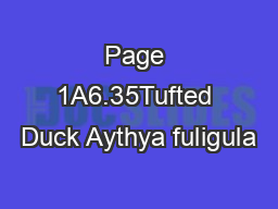 Page 1A6.35Tufted Duck Aythya fuligula