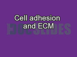 Cell adhesion and ECM PowerPoint Presentation, PPT - DocSlides