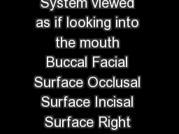 Labial Surface Diagram of the Tooth Numbering System viewed as if looking into the mouth Buccal Facial Surface Occlusal Surface Incisal Surface Right Left Maxillary Arch Upper Jaw Mandibular Arch Low