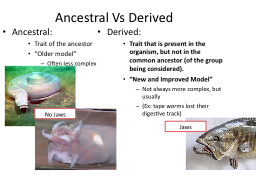Ancestral Vs Derived PowerPoint PPT Presentation