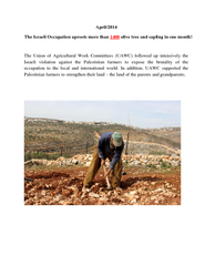 The Israeli Occupation uproots more than PowerPoint PPT Presentation