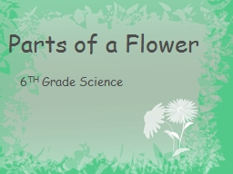 Parts of a Flower PowerPoint PPT Presentation