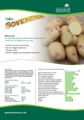 Maincrop: An extremely attractive potato with excellent disease resist