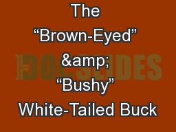 """The """"Brown-Eyed"""" & """"Bushy"""" White-Tailed Buck PowerPoint PPT Presentation"""