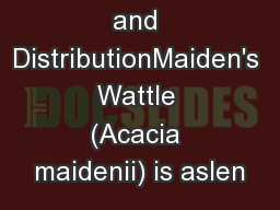 Description and DistributionMaiden's Wattle (Acacia maidenii) is aslen