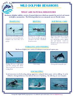WHAT ARE NATURAL BEHAVIORS Bottlenose dolphins exhibit a variety of natural behaviors which are essential for survival and success in dolphin communities