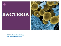 BACTERIA PowerPoint PPT Presentation