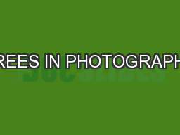TREES IN PHOTOGRAPHY PowerPoint PPT Presentation
