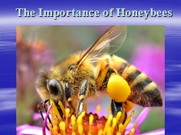 The Importance of Honeybees PowerPoint PPT Presentation