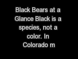 Black Bears at a Glance Black is a species, not a color. In Colorado m