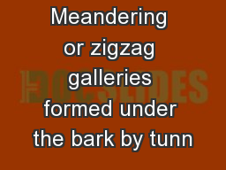 Figure 5. Meandering or zigzag galleries formed under the bark by tunn