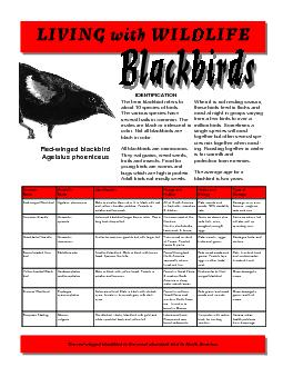I The term blackbird refers to about 10 species of birds.  The various