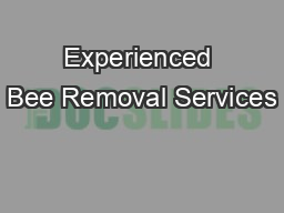 Experienced Bee Removal Services
