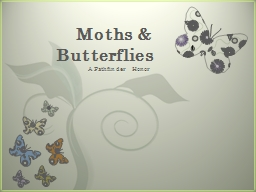 Moths & Butterflies PowerPoint PPT Presentation