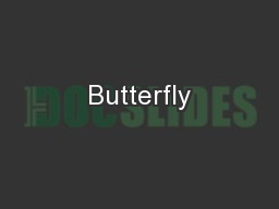 Butterfly PowerPoint PPT Presentation