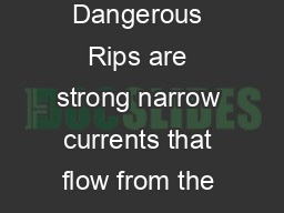 What are Rip Currents Types of Rips Are Rips Dangerous Rips are strong narrow currents that flow from the shoreline seaward past the breaking waves