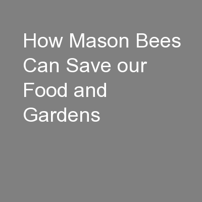 How Mason Bees Can Save our Food and Gardens