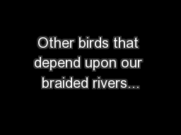 Other birds that depend upon our braided rivers...