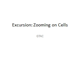 Excursion: Zooming on Cells