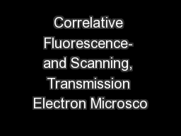 Correlative Fluorescence- and Scanning, Transmission Electron Microsco