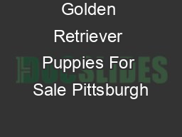 Golden Retriever Puppies For Sale Pittsburgh