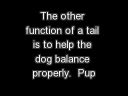 The other function of a tail is to help the dog balance properly.  Pup