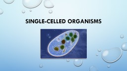 Single-Celled Organisms PowerPoint PPT Presentation
